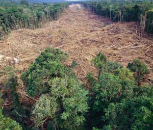 2132019-mondelezdeforestacija