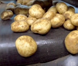 211021_krompir